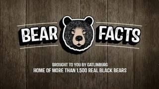 Bear Facts Mating Season
