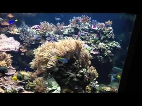 September 2015 Omaha's Henry Doorly Zoo and Aquarium Reef Tank