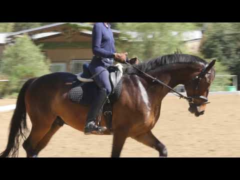 How to sit in the saddle and move with your horse