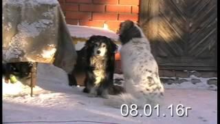 """Весть о Весте. Добрые люди, взявшие собаку из приюта """"Друг"""", о своей любимице"""