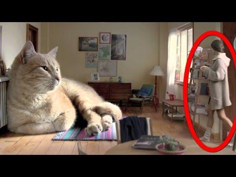Сонник Кот приснился, к чему снится Кот во сне видеть?