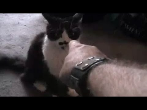 How To Not Train Your Cat