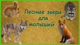 ЛЕСНЫЕ ЗВЕРИ ДЛЯ МАЛЫШЕЙ🐻Учим с детьми лесных зверей/Развивающий мультфильм