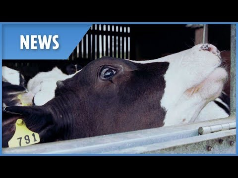New Case Of Mad Cow Disease Discovered At British Beef Farm