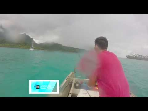 Spearfishing  Raiatea (poisson café) 2016