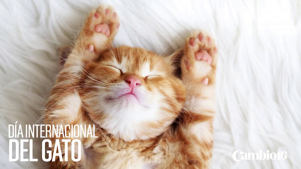 Imágenes Día del Gato Internacional World Cat Day