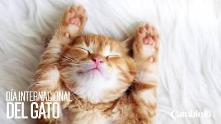 8 de agosto: Día internacional del gato