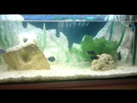 mein aquarium mit exotischen fischen 3d r ckwand. Black Bedroom Furniture Sets. Home Design Ideas