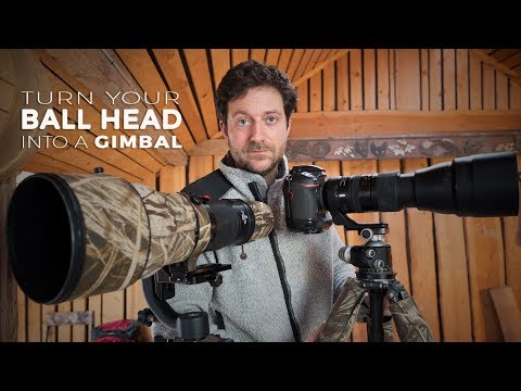 How To Turn Your BALL HEAD Into A GIMBAL For Wildlife Photography