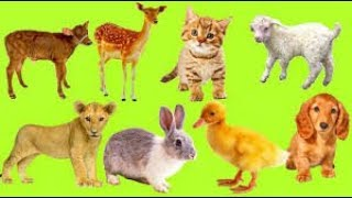 the sound make of animal video for kid, toddlers, kids - Little Genius,videos for babies,