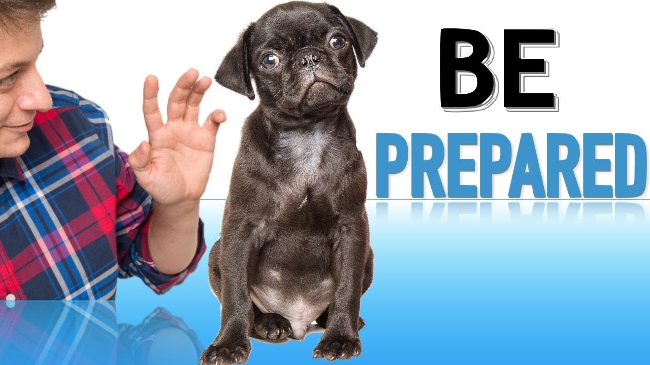 Discussion on this topic: How to Prepare Your Dog for the , how-to-prepare-your-dog-for-the/