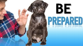 How to Prepare your Family for a New Puppy