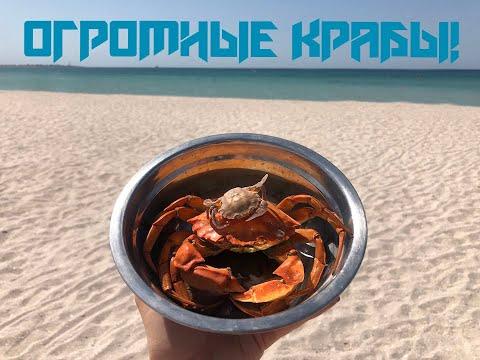 Огромные крабы Крыма! Ловим, готовим и едим =) ENG SUB