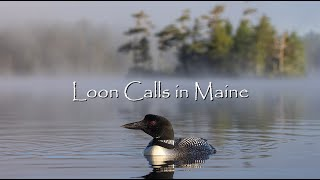 Loon Calls in Maine - Canon R5 & 100-500mm RF Lens - 4K