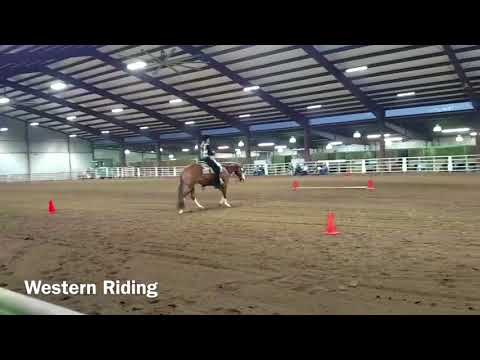 2018 apha novice amateur hus video