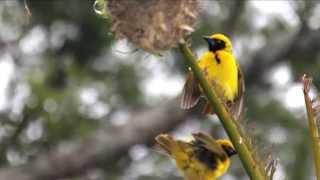 Itzhak Perlman / Samuel Sanders – Zapateado, Sarasate, Birds of South Africa (Güney Afrika Kuşları)