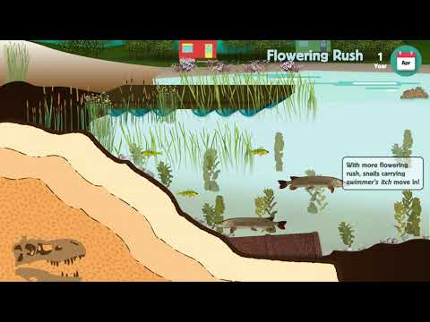 Impacts of Flowering Rush