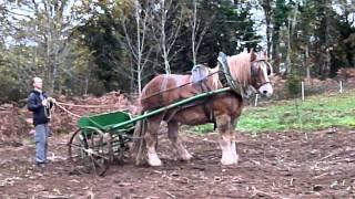 Traction animale en wwoofing