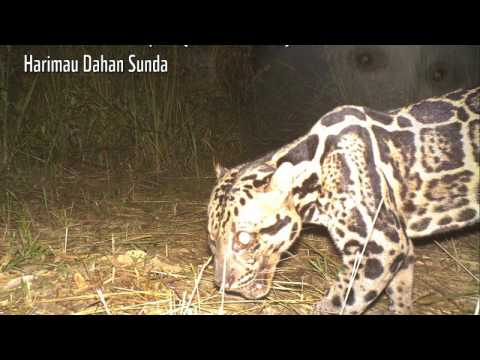 Sabah's Camera Trap Photos