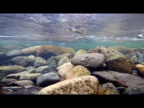 рыбалка в кемеровской области на хариуса