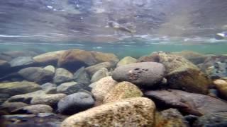 Риболовля на річці м. Казыр. Підводні зйомки Харіуса