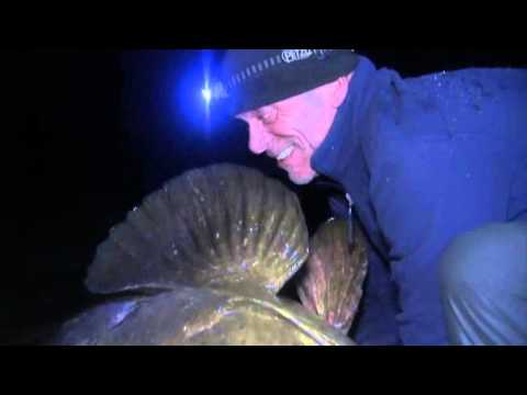 Discovery Ch River Monsters Season 4 1of8 American Killers DVDrip x264 AAC MVGroup org 0