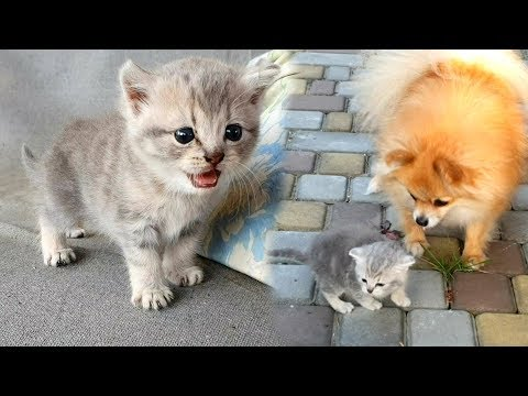 The rescued kitten is looking for a new mom cat, but found a new mom dog