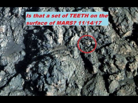 A set of TEETH on the surface of MARS? +  other small finds 11/14/17