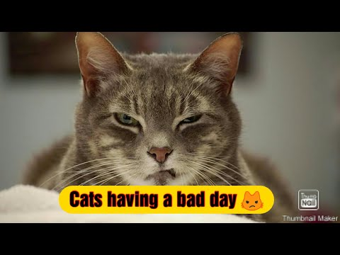 Cats with attitude having a bad days.