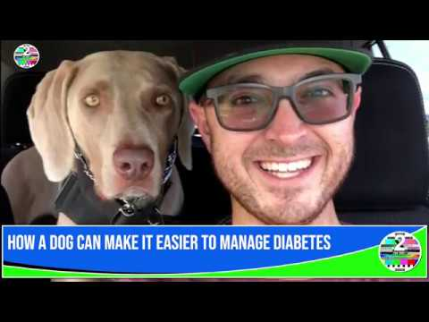 how-a-dog-can-make-it-easier-to-manage-diabetes