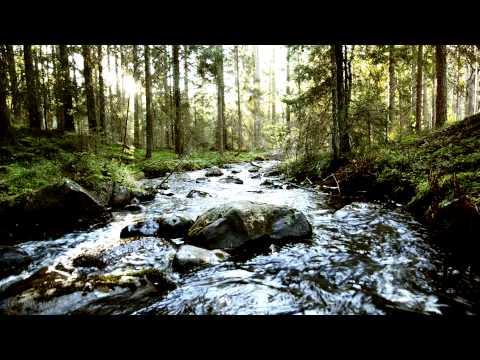 Relaxing Nature MusicSwedish Forests - Suoni della Natura