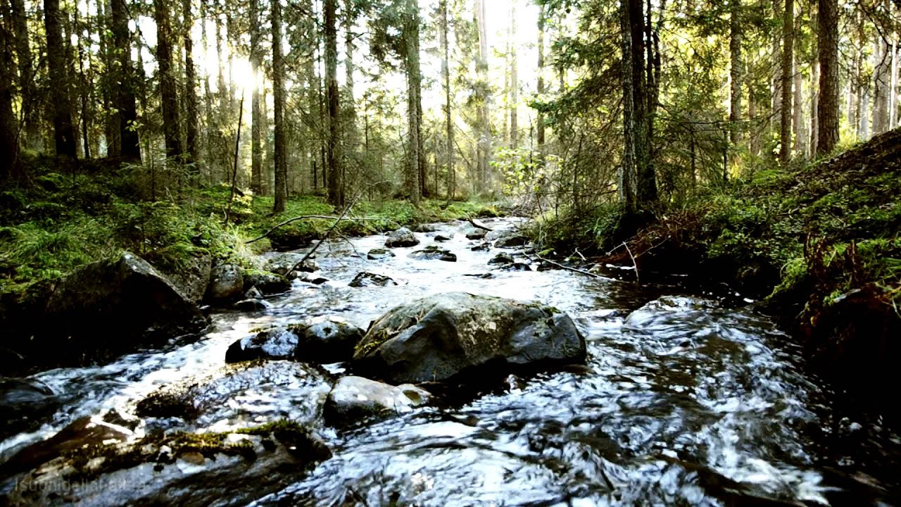 Relaxing Nature Music Swedish Forests Suoni Della Natura