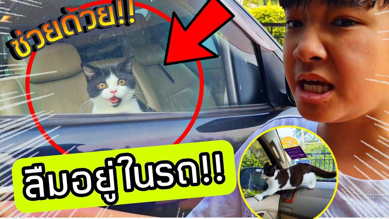 ช่วยด้วย!! แมวถูกขังในรถ!! หายใจไม่ออก เพราะเล่นซ่อนแอบประตูล็อคอัติโนมัติออกไม่ได้ | ละครสั้นสอนใจ