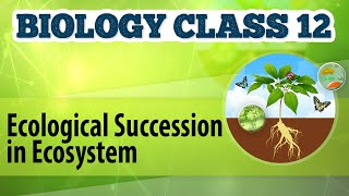 Ecological Succession in Ecosystem - Organisms and Environment 1 - Biology Class 12