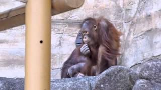 多摩動物公園 2016年2月25日.