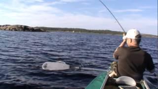 Рыбалка на Белом море. 2014(рыбалка с командой