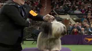 Usa-dogs/westminster-best In Show 2015