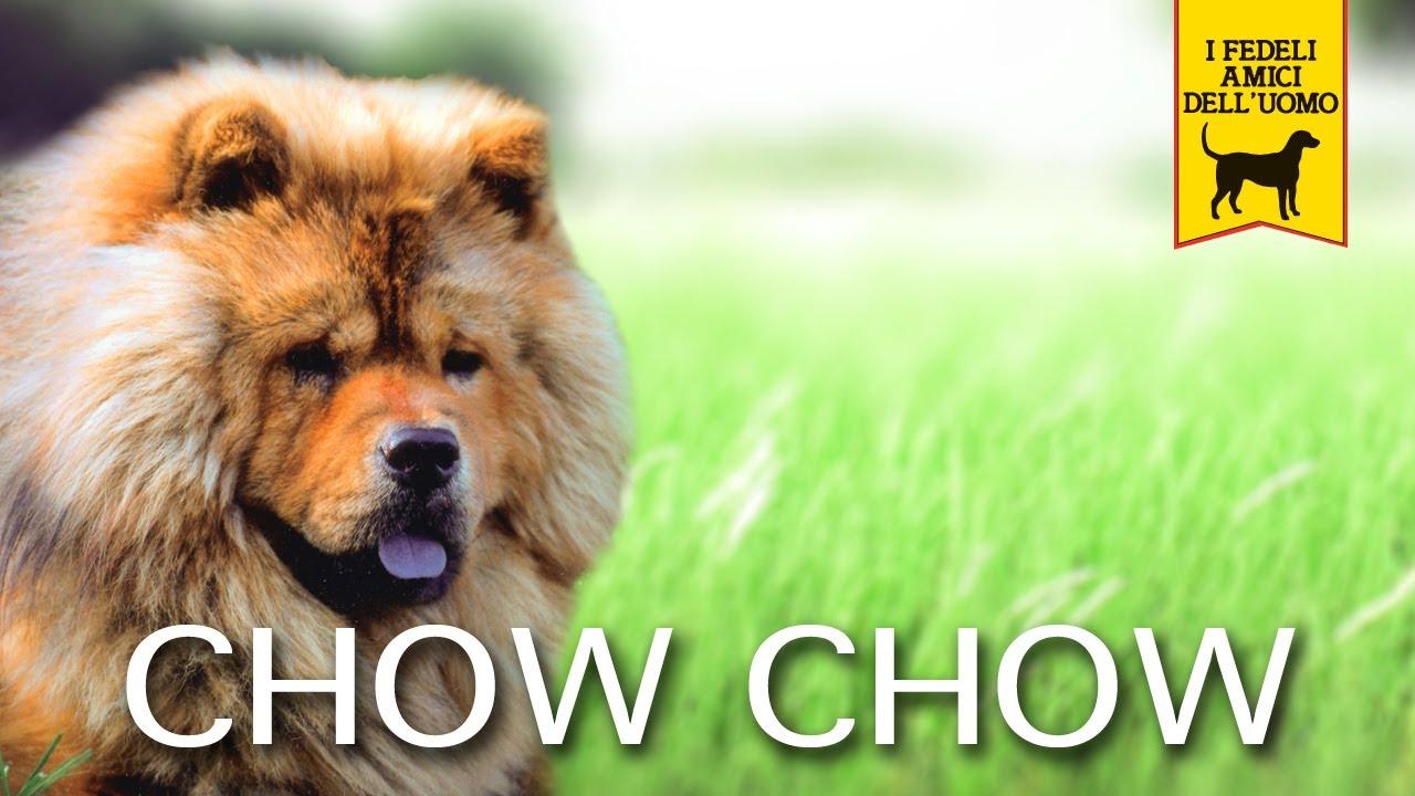 Chow Chow Trailer Documentario Youtube