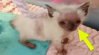 Rescuers Found This Abandoned Kitten Wasting Away  Then They Realized Her Face Was Changing