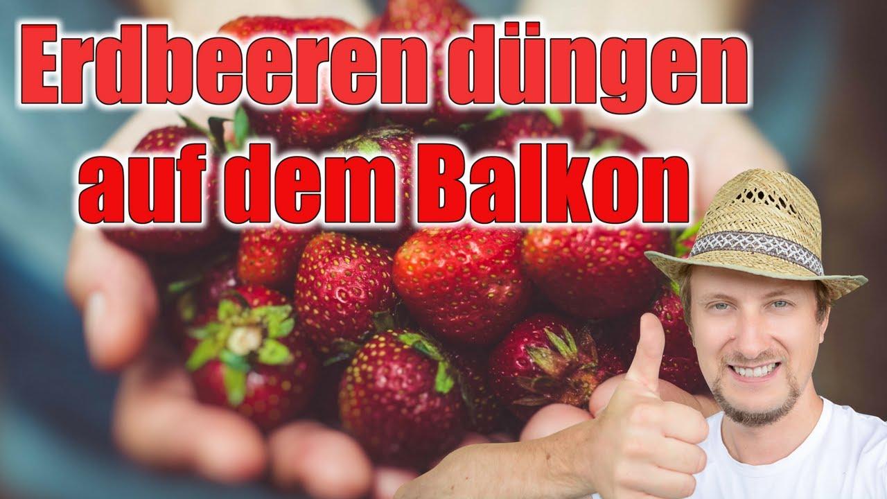 Erdbeeren Dungen Auf Dem Balkon Garten Youtube