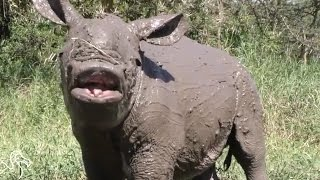 Abandoned Baby Rhino Loves His Morning Jog