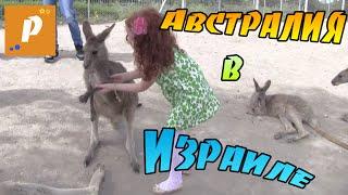 VLOG Нашествие кенгуру в Израиле  :)
