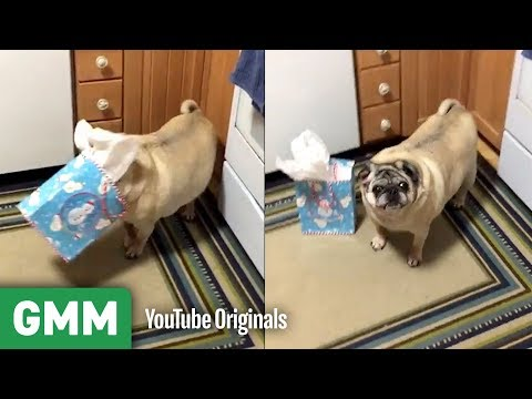 Download Youtube: Dogs Opening Gifts | Teach Your Old Dog A New Trick