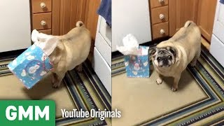 Dogs Opening Gifts | Teach Your Old Dog A New Trick