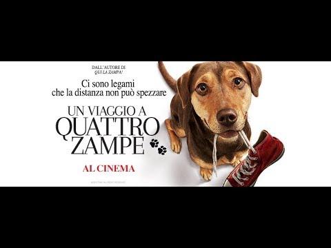 Un Viaggio a Quattro Zampe - Trailer italiano | Da marzo al cinema