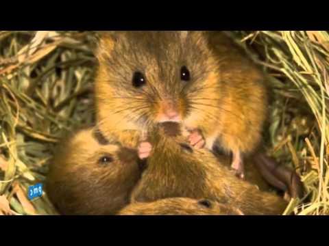 Tập tính sinh hoạt của chuột - Kiểm soát côn trùng