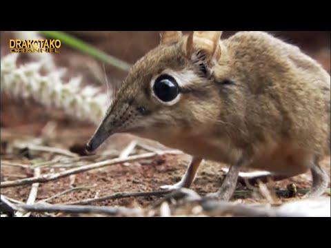 TOP 10 ANIMALES QUE MÁS DUERMEN DEL MUNDO
