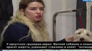 Как украшают и наряжают весной кошек и собак в Иркутске