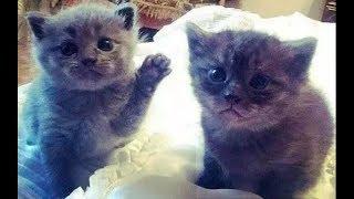 Смешные коты и кошки приколы с котами и кошками БЕЗ МОНТАЖА (2019)