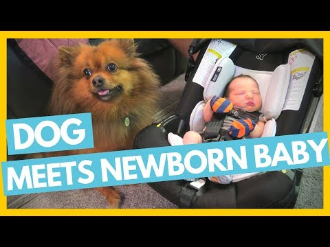 Dog Meets Newborn Baby 👶🐶Full Time Travel Family